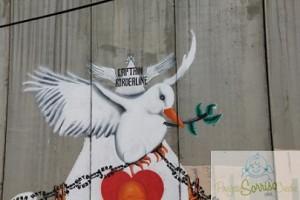 colomba della PACE.tn