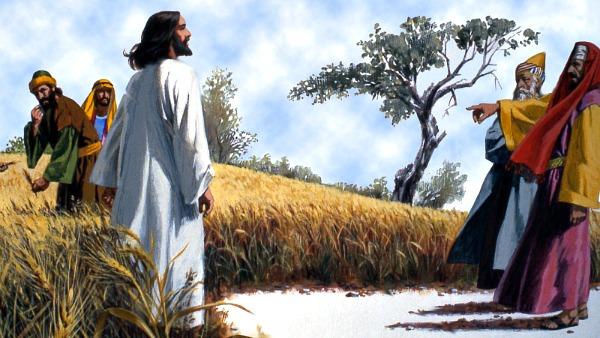 #Vangelo: Il Figlio dell'uomo è signore anche del sabato (Mc 2,23-28)