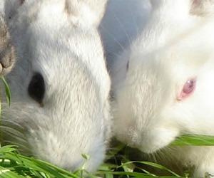 Non dobbiamo fare come i conigli. La rivoluzione sessuale di Papa Francesco