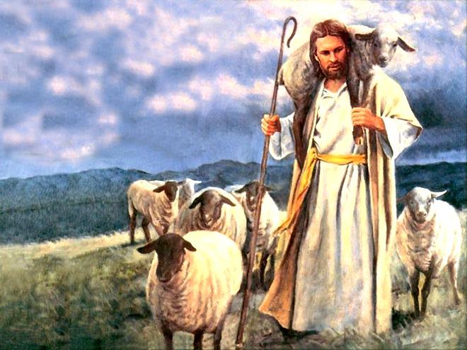 pastore pecore olio