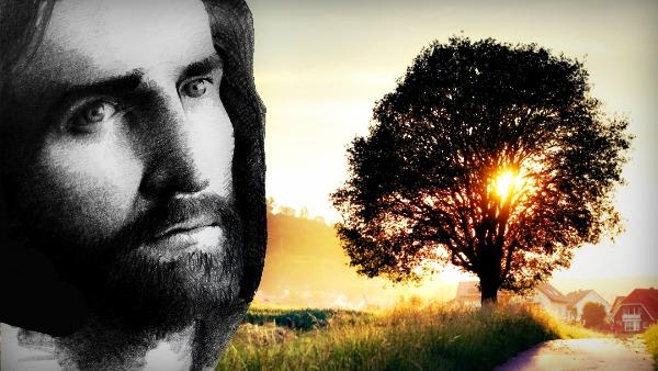 #Vangelo: È il più piccolo di tutti i semi, ma diventa più grande di tutte le piante dell'orto.