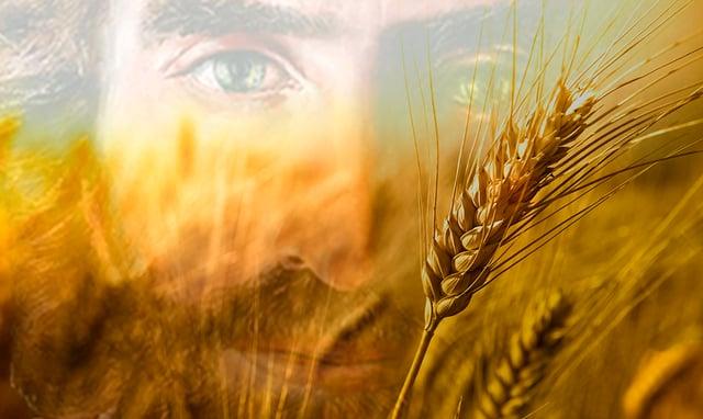 #Vangelo: Il Figlio dell'uomo è signore del sabato.