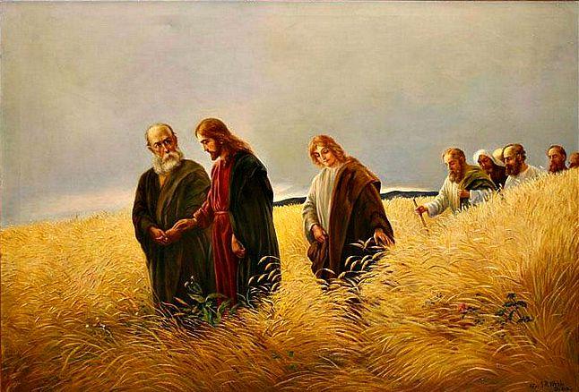 #Vangelo (5 settembre): Un sabato Gesù passava fra campi di grano