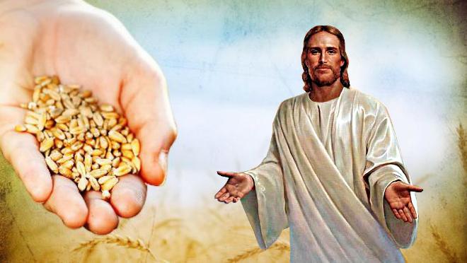 #Vangelo (19 settembre): Il significato della parabola è questo: il seme è la Parola di Dio.