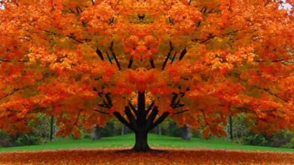 Sabato 12 settembre - Insegnami la pazienza delle stagioni