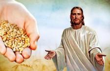 Vangelo (23 settembre) Il seme caduto sul terreno buono sono coloro che custodiscono la Parola