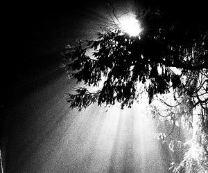 Venerdì 16 ottobre - E solo l'amore sopporta la luce