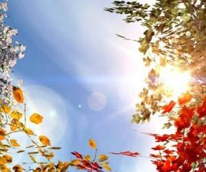 Domenica 1 novembre - Beata non per il dolore ma per l'amore