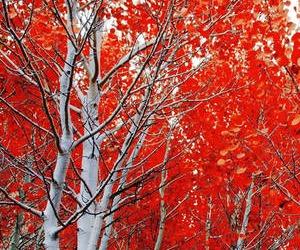 Mercoledì 18 novembre - Il servo fedele ha un padrone che lo ama