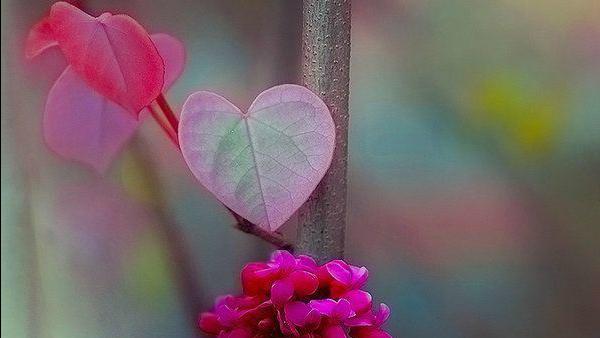 Lunedì 9 novembre - Amo il tuo tempio fatto di carne e di sangue