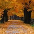Martedì 3 novembre - C'è così tanto posto nella tua casa