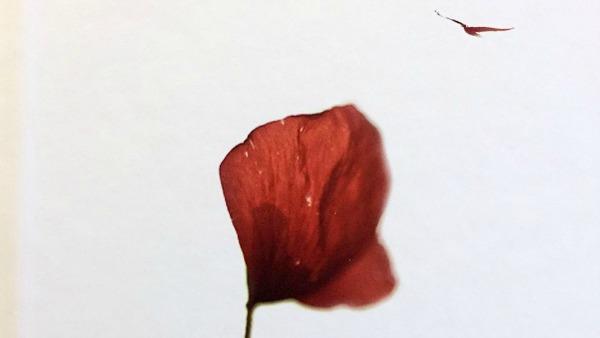 Sabato 2 gennaio - Ero morta e mi ha dato la sua vita