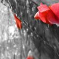Martedì 1 Marzo - La vita è come l'amore, senza misura, senza prezzo