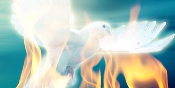 dove-fire-572x290