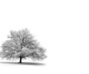 Mercoledì 27 Aprile - Rimanere è il verbo della vita