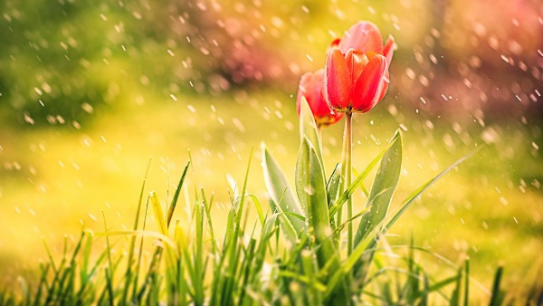 Martedì 14 Giugno - Sarò sole. Sarò pioggia