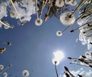 Venerdì 17 Giugno - Nasconderò la mia vita in cielo