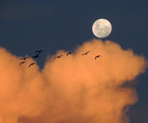 Giovedì 24 Novembre - E ci sarà luce in cielo