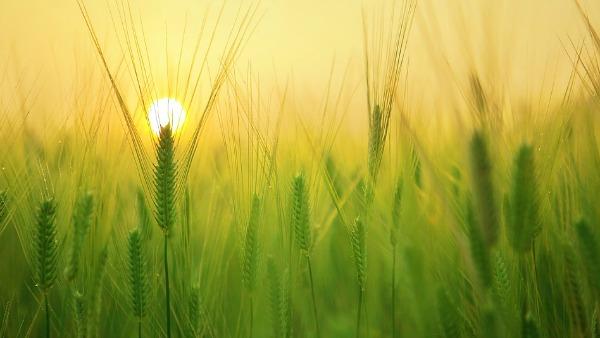 Sabato 5 Novembre - Tutti i frutti nascono seme