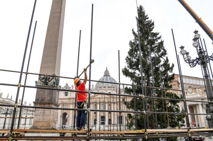 Albero di Natale in piazza san Pietro, Citta del Vaticano, 24 novembre 2016. ANSA/ALESSANDRO DI MEO