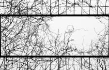 Venerdì 24 Febbraio – Vogliamo sapere la misura della gabbia