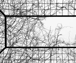 Venerdì 24 Febbraio - Vogliamo sapere la misura della gabbia