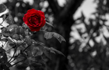 Mercoledì 17 Maggio – Rimanere è il verbo della vita