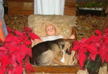 Natale ed Avvento
