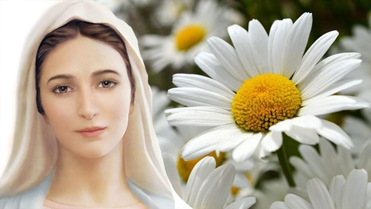 Madonna di Medjugorje - Rubrica