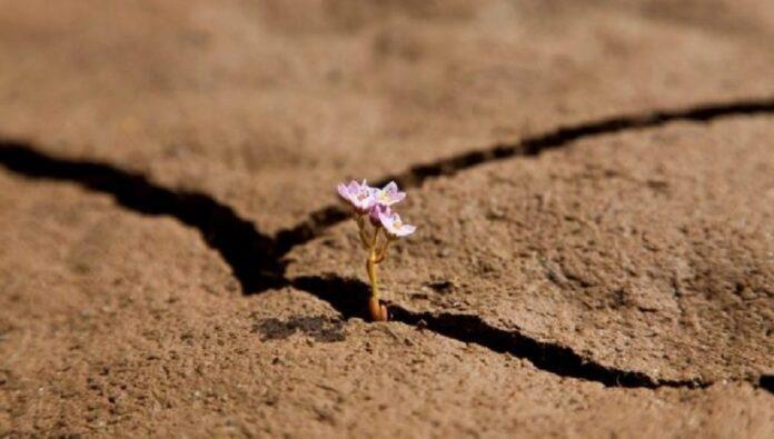 fiore-nel-deserto.essere.docili.j