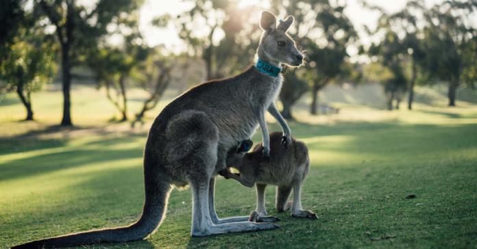 Australia, ottieni visto oggi